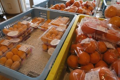 Sakurajima megumian rest stop selling oranges (oranges)