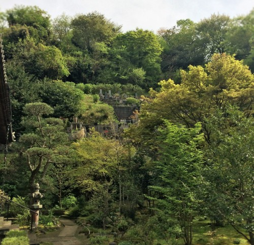 view from Engaku-ji temple teahouse