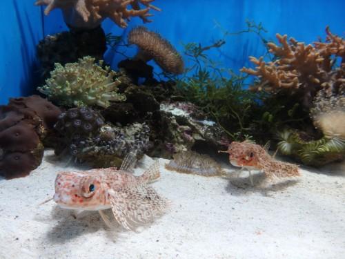 Some of the ocean fish at the Numazu Aquarium