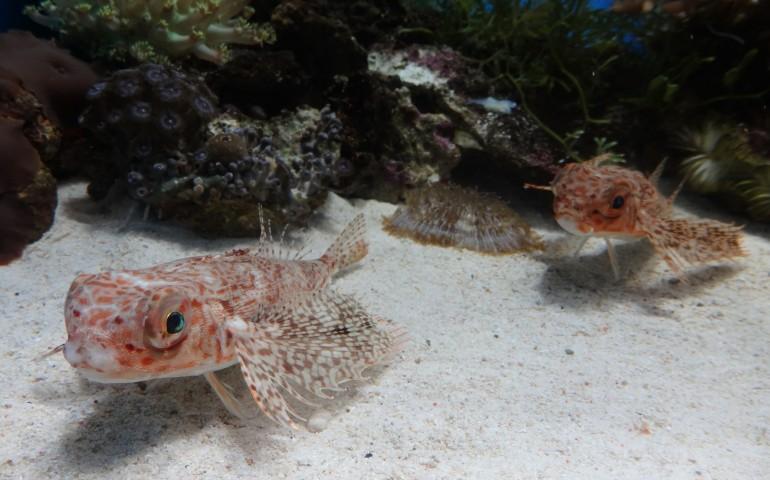 Fish swimming at the Numazu Deepblue Aquarium in Shizuoka Prefecture