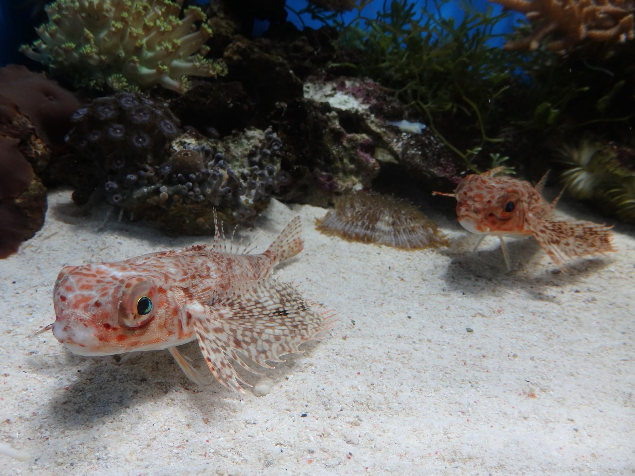 Numazu Aquarium: Discover the World's Most Bizarre Creatures