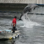 Dolphin Port, a free and spectacular show in Kagoshima