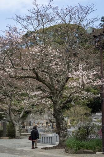 Myohonji Temple near a graveyard with a long history.
