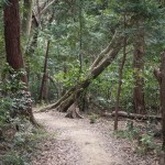 Hiking in Kamakura: Gionyama hiking course