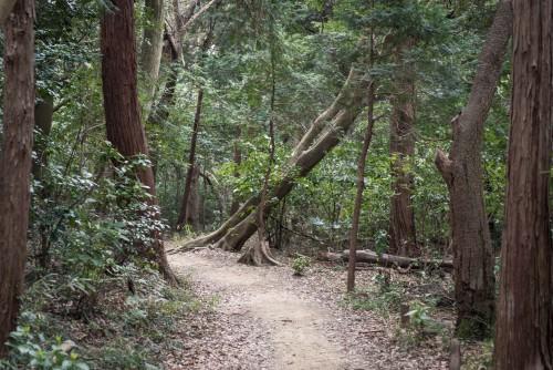 Trees in Gionyama hiking course in Kamakura.
