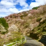Mount Yoshino, a famous site for hiking and cherry blossoms