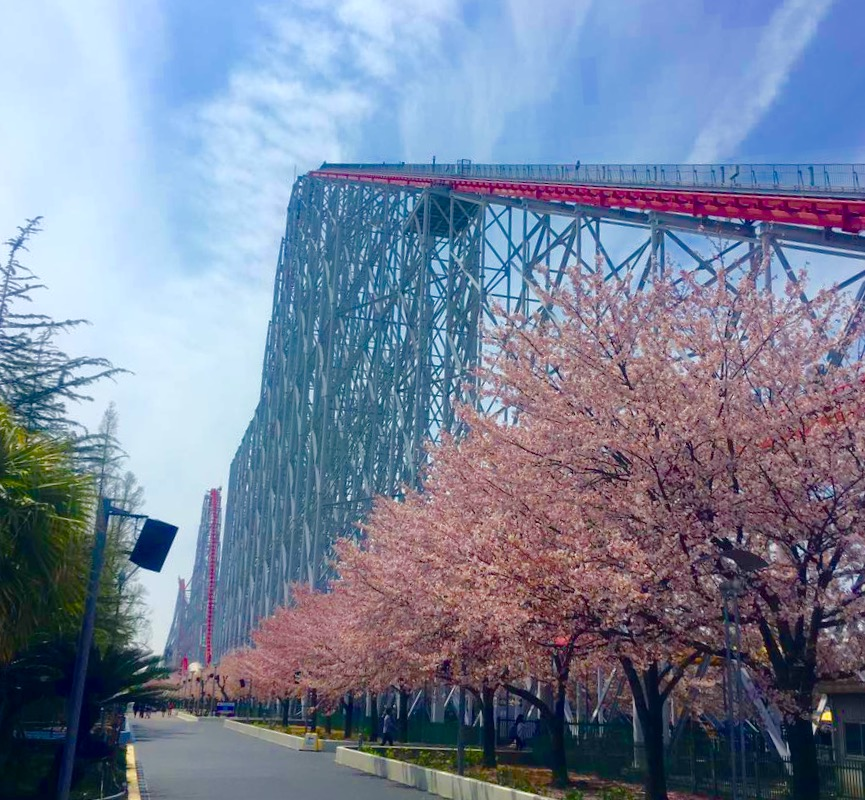Steel Dragon 2000 roller coaster with cherry blossoms