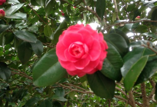 Flower bloom among Genjiyama Park blossoms, hiking treat after Kewaizaka Pass, Kamakura
