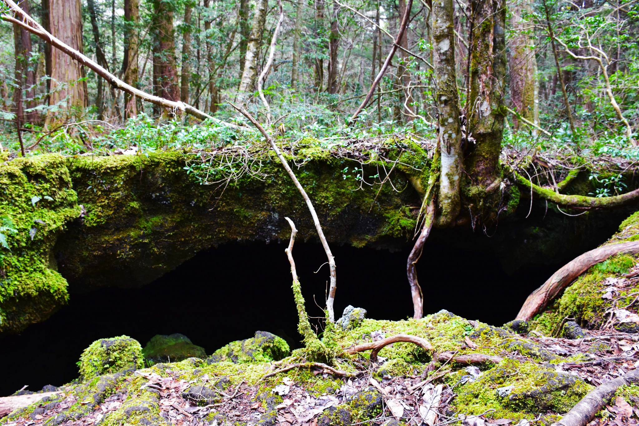 "Aokigahara: Hiking ""The Suicide Forest"" Trail"