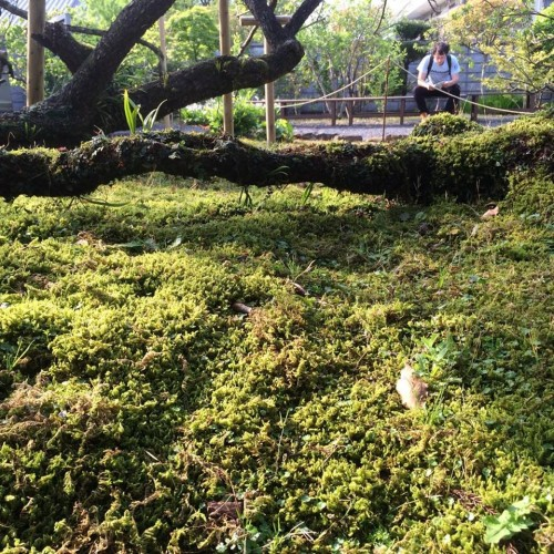 moss layers cover the grounds of Amakusa Garden in Kumamoto