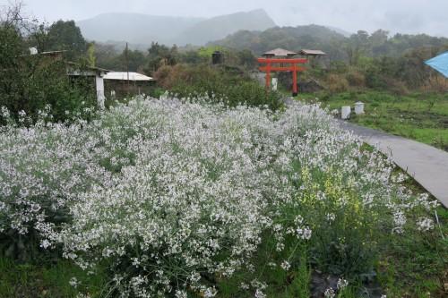 Discover Sakurajima Island by Long Island Bus Tour