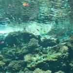 Maeda Cape – exploring clear waters of the ocean
