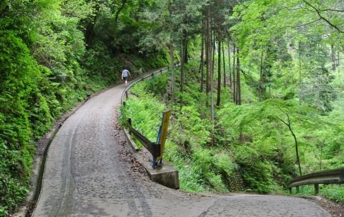 Enjoy mountain hiking close to Tokyo at Mt Takao