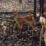 Nara Deer Park through the Seasons