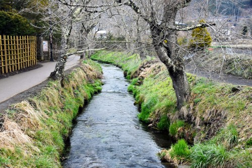 River running through Oshino to a lake, that passes through a forest like bank in Yamanashi.