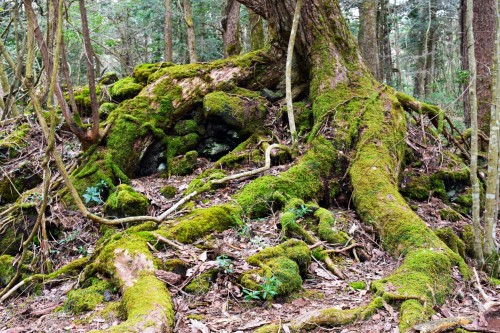 Tree of a forest near the lake in Yamanashi.