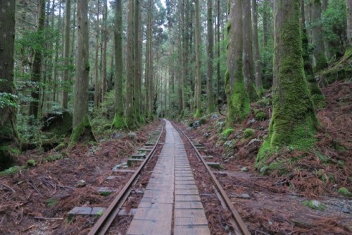 The journey to the great jomon Sugi in Yakushima, Kagoshima, Japan.
