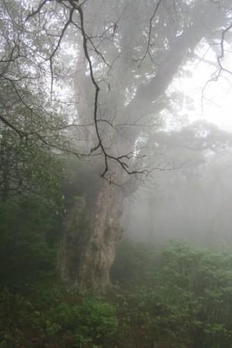 The hiking scenery in Yakushima, Kagoshima, Japan.