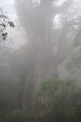 misty and rainy Yakushima, Kagoshima, Japan.