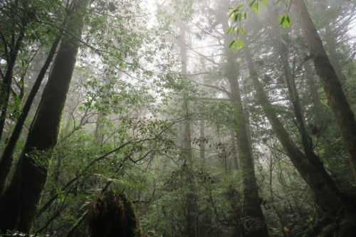 a forest like the one featured in Princess Mononoke could actually be that close to reality.