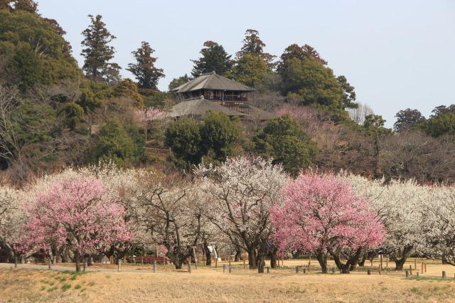 Exploring Kairakuen garden and Senba lake!
