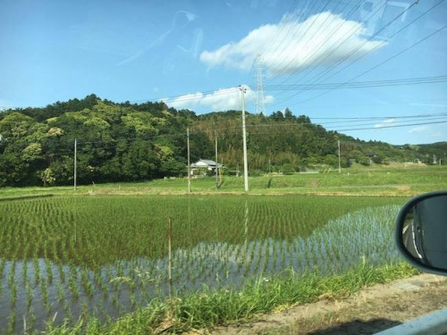 rice fields in Chiba is widely spreading