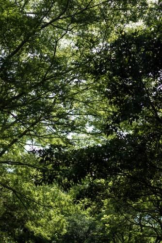it's beautiful green trees