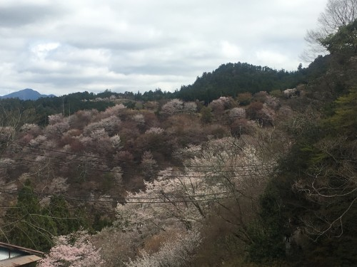 Nara mountain Mount Yoshino with pink cherry blossoms before grey sky