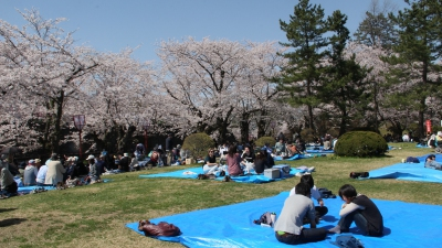 Enjoying a picnic at Hirosaki park