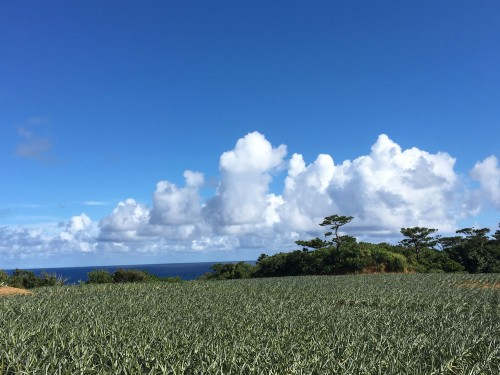 Iriomote Island landscape scenery
