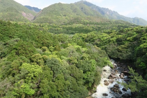 Nice river view in Yakushima reminded us that plenty of nature in yakushima has been preserved carefully