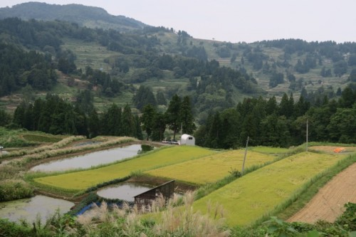 Yamakosi is smaller village in Niigata where paddy fields are spotted from place to plcale