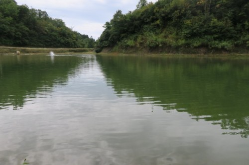 Ponds are situated in Yamakoshi village