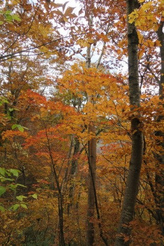 Autumn colours in Mount Hotaka