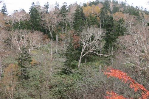 On the trail to Mount Hotaka