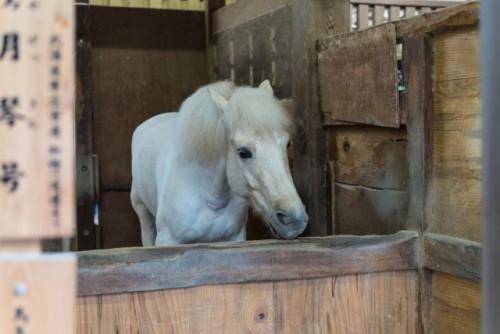 God horse in Konpirasan