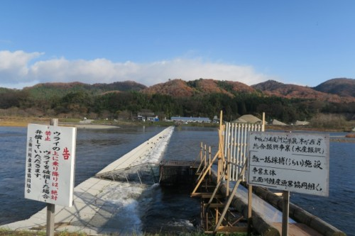 Where you can witness the salmon fishing in Murakami