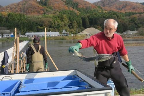 Catching Salmons!!