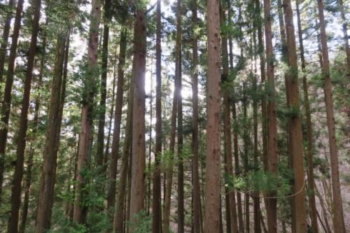 Quiet forest in Kuni District