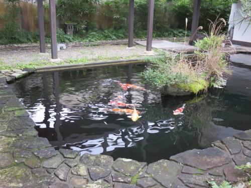Koi pond in Karatsu
