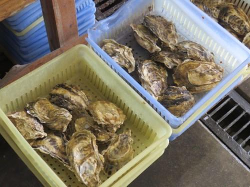 Takezaki oysters, a local speciality in Saga