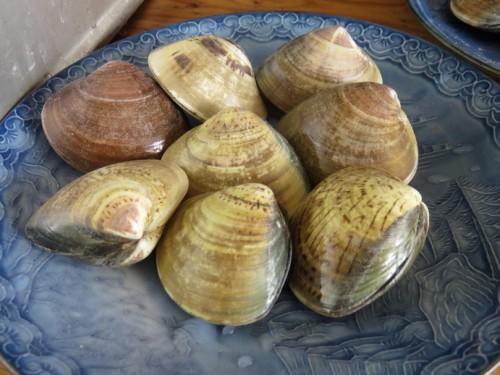 fresh seafood in Takezaki kaisan