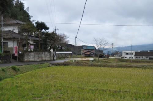 Rice field in Imari