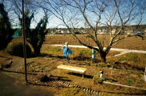 Scarecrow in Shizuoka