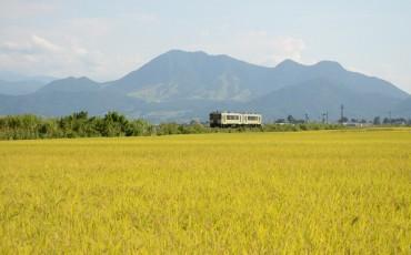 Local Iiyama train