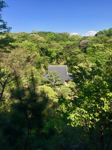 Above the Trees at Sankeien Gardens