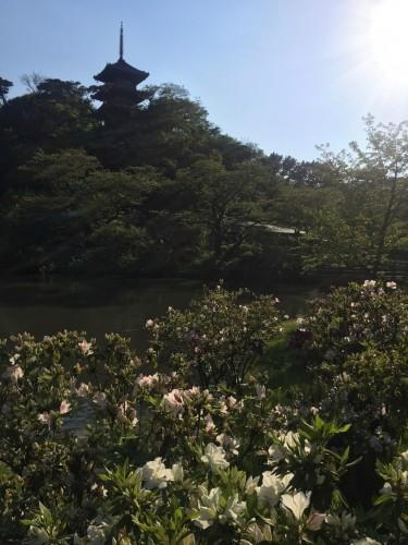 Sankeien Garden Pagoda View, Sankeien Garden in Yokohama, is the perfect place to start.