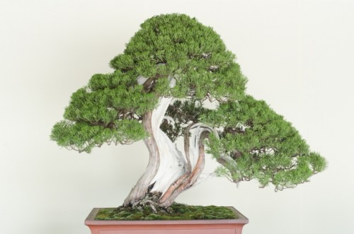 Bonsai And Where To See This Unique Art Form In Japan