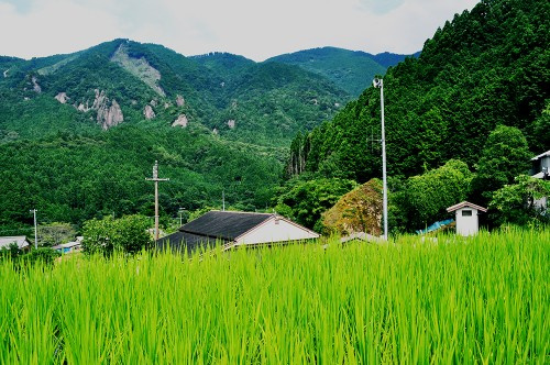 Free housing in Japanese farms and homes.