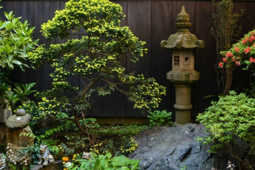 Fujimien Tea Shop Garden